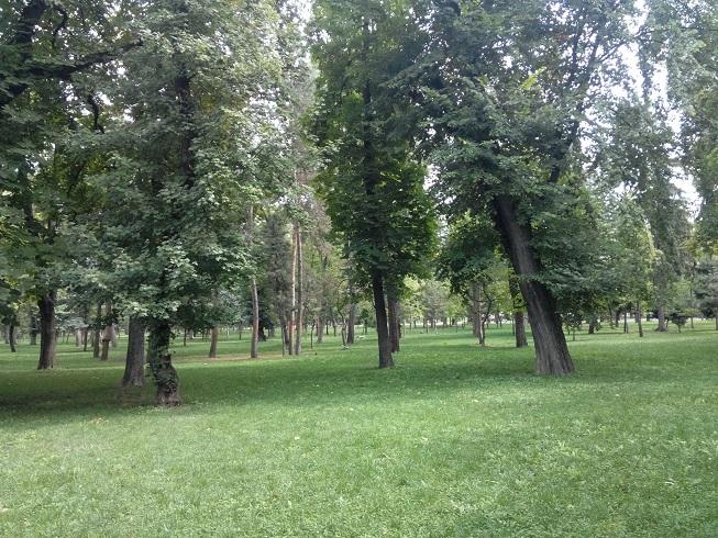 In luna octombrie Clujul prinde viata