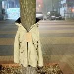 29 ianuarie Îmbracă un copac