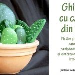28 aprilie Ghiveciul cu cactusi din piatra