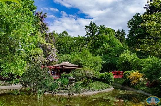 1iunie Intrare gratuită pentru copii de ziua lor în Grădina Botanică