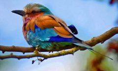 Păsărica de pe ram