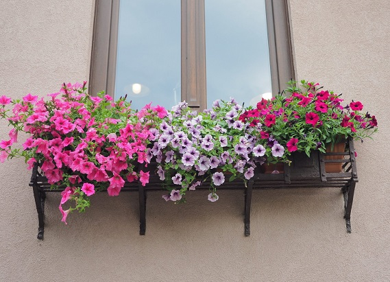 Clujul cu flori